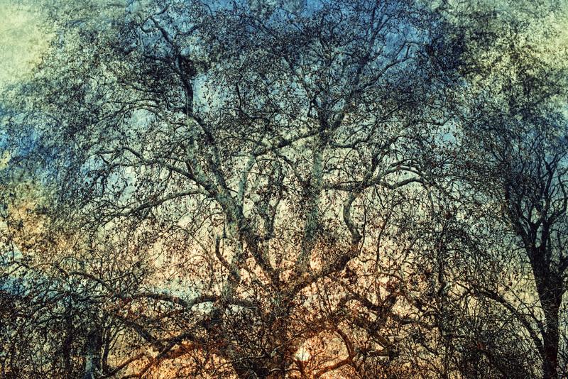 AKKADIA - Fotografia - Autumn leaves