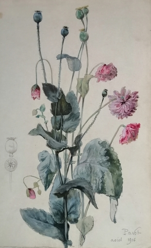 Alfred KELLER - Dibujo Acuarela - Pavot - Botanique