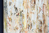 Adam COHEN - Peinture - Sirocco