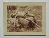 Wilhelm VON GLOEDEN (1856-1931) - Nude in agony