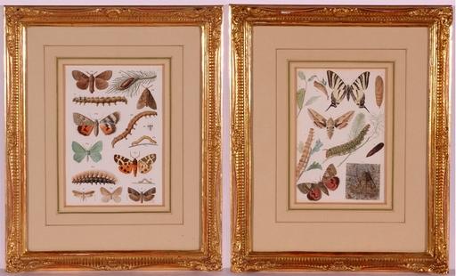 "Josef FLEISCHMANN - Dessin-Aquarelle - ""Butterflies"", Two Watercolors, ca.1900"