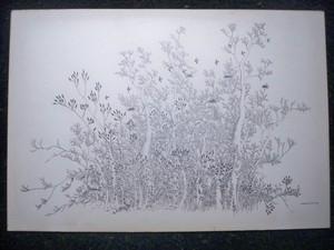Ivan LACKOVIC - Drawing-Watercolor - Arbres et Hirondelles