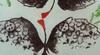 "TOYEN - Grabado - For ""The Alert Box"" from the International Surrealist Exhibi"