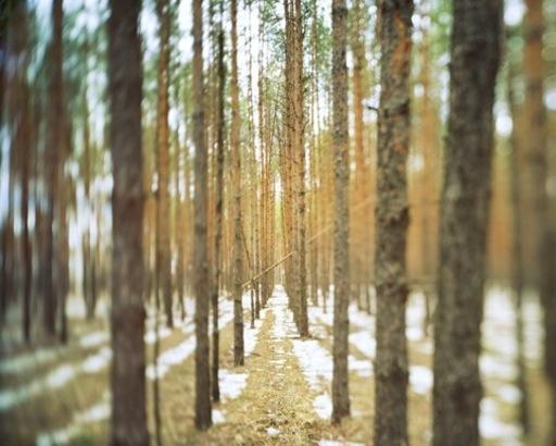 Charles XELOT - Fotografia - Flou Automne / 4 saisons