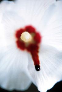 Robert GLIGOROV - Photography - Tutti frutti III (1)