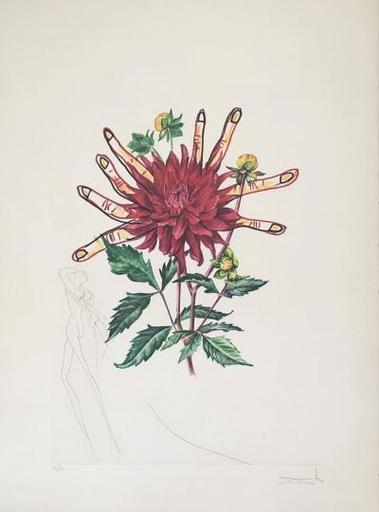 Salvador DALI - Estampe-Multiple - Dahlia Rapax - Surrealistic florals
