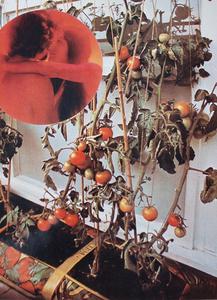 韦德•盖顿 - 照片 - The Tomato Lovers