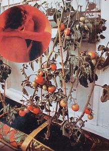 Wade GUYTON - Photo - The Tomato Lovers