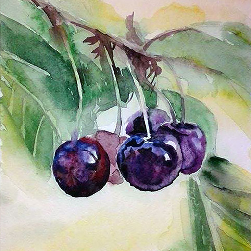 "Galina VINDALOVSKAIA - Drawing-Watercolor - realistic  ""Sweet Cherry"" for the kitchen berries fruit"
