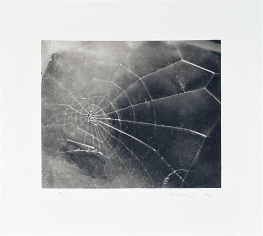 维加•塞尔敏斯 - 版画 - Spider Web