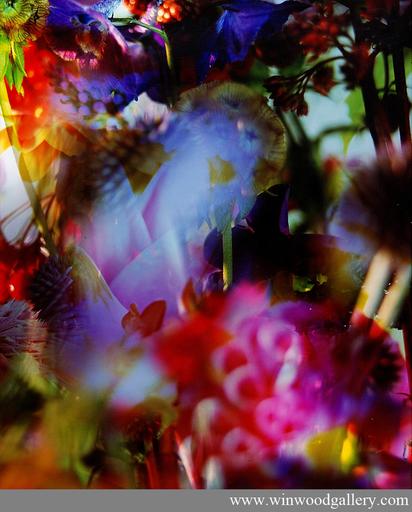 Marie-Jo LAFONTAINE - Fotografia - Paradise Lost I