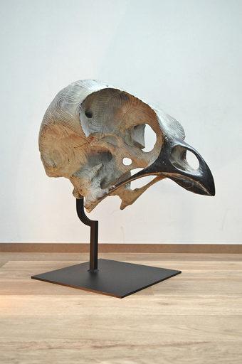 Quentin GAREL - Scultura Volume - Crâne d'oiseau