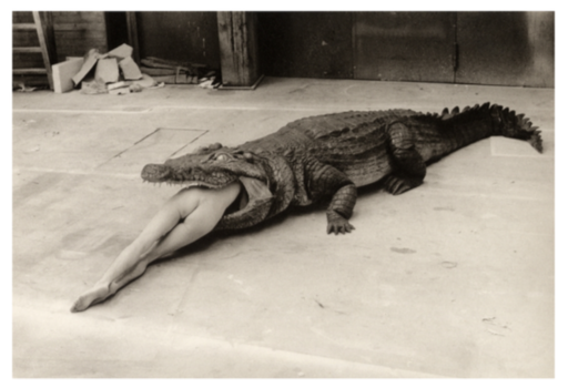 Helmut NEWTON - Fotografie - The Legend of Virginity
