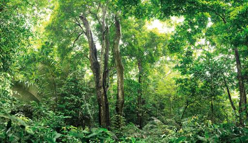 Cedric BREGNARD - Photo - Jungle, Triptyque