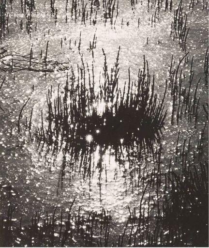 Lucien CLERGUE - Fotografia - Carmargue 1965