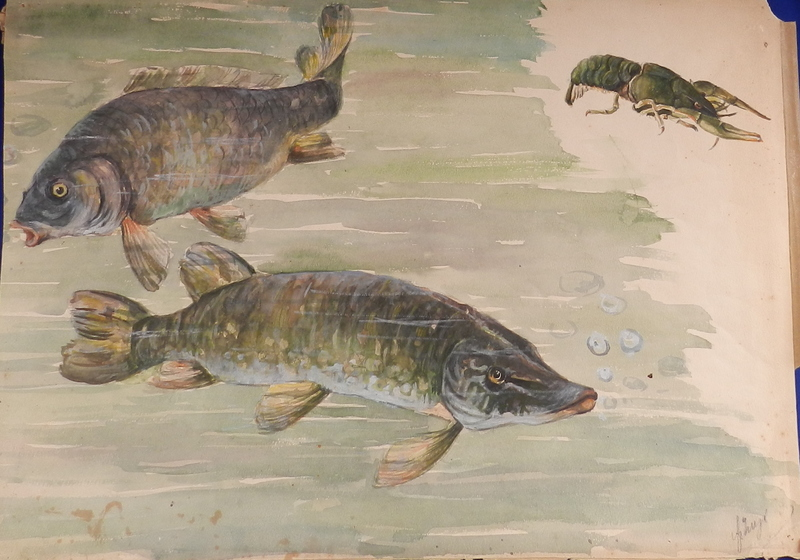 István SZÖNYI - 水彩作品 - Pike, carp and crayfish