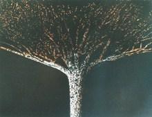 """Mario PRASSINOS - Grabado - """"L'arbre"""""""