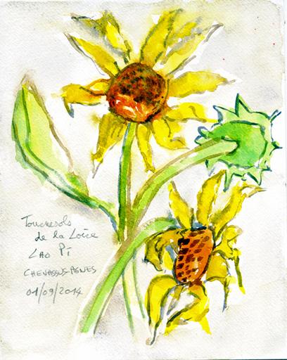 Jean-Pierre CHEVASSUS-AGNES - Dessin-Aquarelle - Fleurs de tournesols de la Loire à MONTBRISON