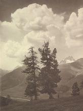 Johann FEUERSTEIN - Photography - Landschaft mit Baume