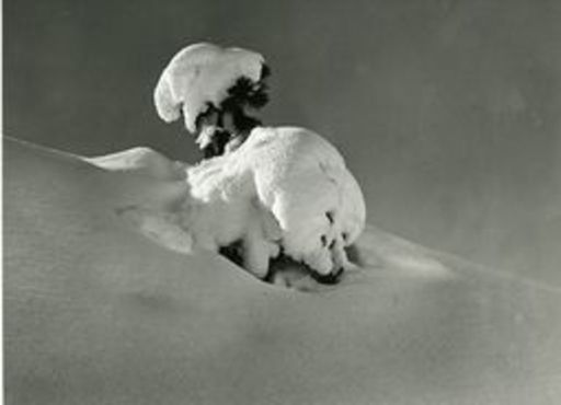Andreas PEDRETT - Photo - Schneebaum