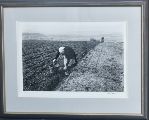 Carl MYDANS - Photography - Potato Planting