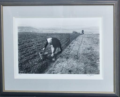 Carl MYDANS - Photography - Potato Planting