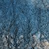 AKKADIA - Estampe-Multiple - Winter Dawn / Series Sanctuary