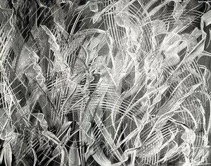 Didier ANGELS - Peinture - Jack Daniels 005