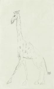 Henri DE TOULOUSE-LAUTREC, Giraffe