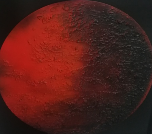 Paola ROMANO - Pintura - Luna rossa