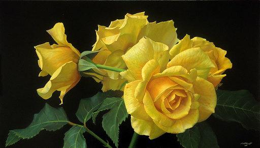 Antonio MORANO - Pintura - Rosal Amarillo