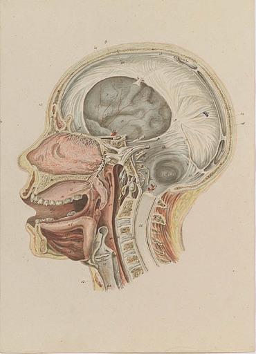 "Johann Daniel W. HARTMANN - Drawing-Watercolor - ""Anatomical Study"" , early 19th Century"