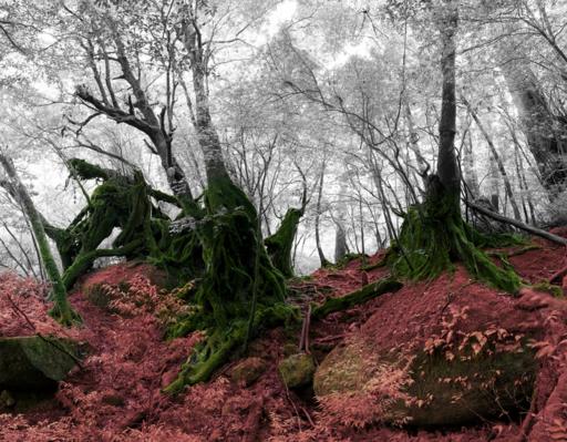 Cedric BREGNARD - Photo - Cedar soul I Japan - forêt rouge