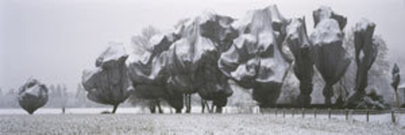 CHRISTO - Photo - Wrapped Trees in Riehen / Basel  (1998)