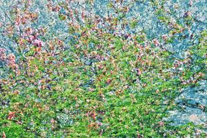 AKKADIA - Estampe-Multiple - Les Jardins de Bagatelle 2016 III / Series Hanging Gardens