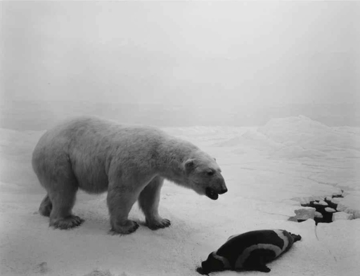 Hiroshi SUGIMOTO - Photo - Polar Bear