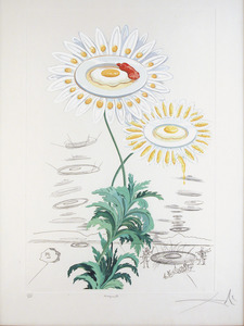Salvador DALI - Estampe-Multiple - Flora Dalinae Chrysanthemum