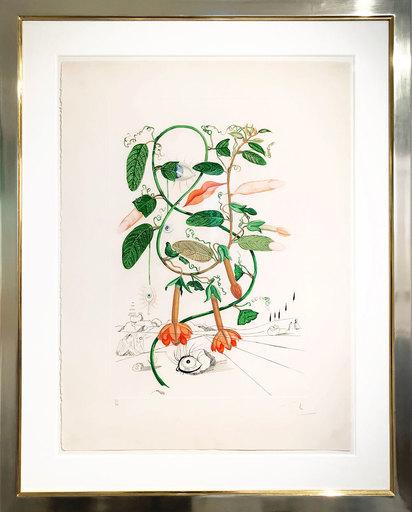 萨尔瓦多·达利 - 版画 - Cobea (Pisum sensuale)