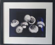 欧文•佩恩 - 照片 - Still life of mushroom