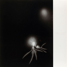杉本博司 - 版画 - Lightning Fields
