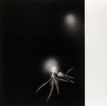 Hiroshi SUGIMOTO - Grabado - Lightning Fields