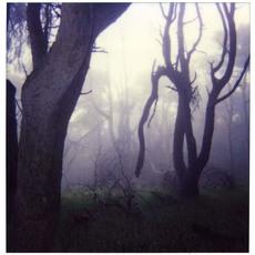 ELIZERMAN - Photography - Tree Devon