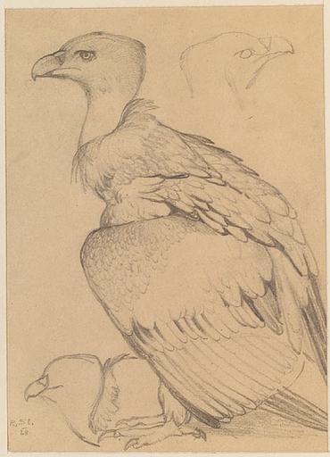 """Rudolf STOITZNER - Zeichnung Aquarell - """"Bird Study"""", 1928"""