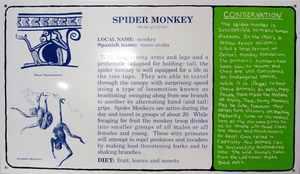 Mark DION - Sculpture-Volume - Spider Monkey