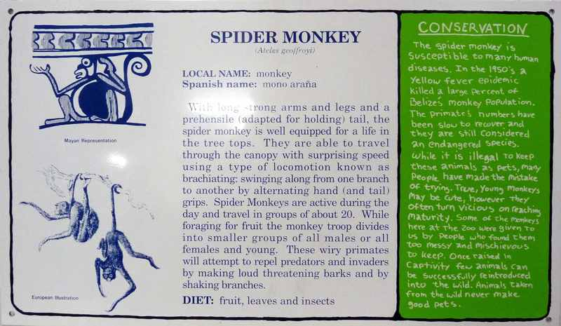 Mark DION - Scultura Volume - Spider Monkey