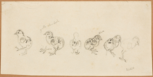 "Carl GOEBEL - Drawing-Watercolor - ""Chicken studies"", drawing, 1940/50s"