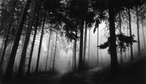 Robert LONGO - Photography - Fairmount Forest