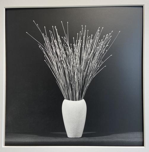 Robert MAPPLETHORPE - Fotografia - Flower 1983