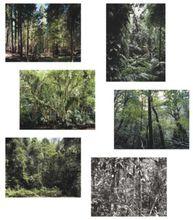 Thomas STRUTH - Print-Multiple - Paradise – portfolio of six works