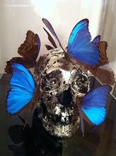 Philippe PASQUA - Sculpture-Volume - VANITE AUX PAPILLONS